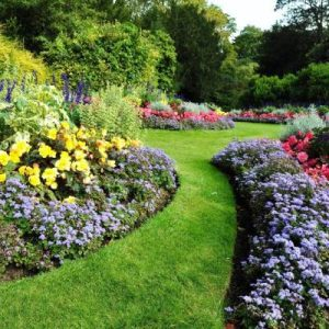 Exterior Ornamental Plants