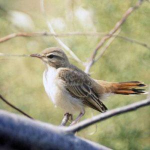 Bird And Vertebrate Animal Pests