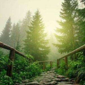 Forest Pest Management
