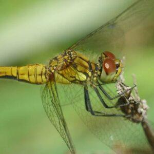 Aquatic Pest Management